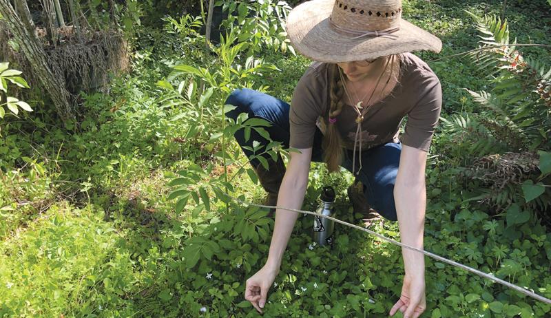 herbal grow herbs