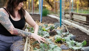 The First-Time Gardener mulch garden