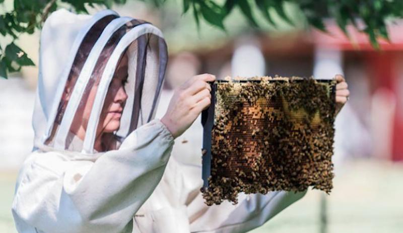beekeeping zero-waste zero waste