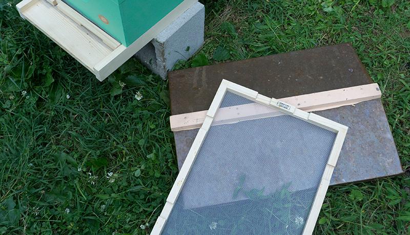 bee hive frames