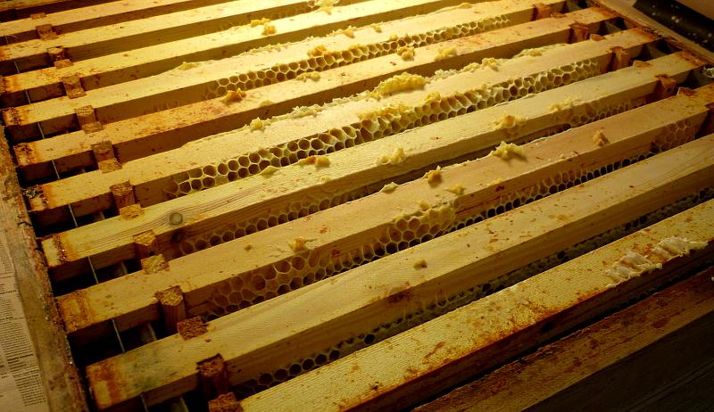 beekeeping bees cleaning