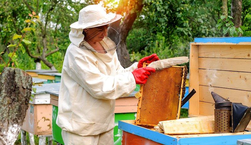 beekeeping myths bees honeybees