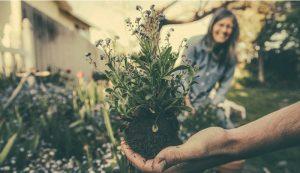 holistic plan garden gardening grow