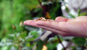 garden seeds seed 2021