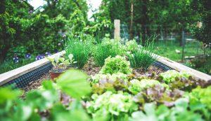 planning kitchen garden 2021