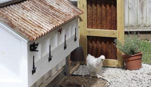pandemic chicken coop
