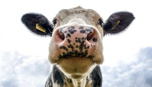 livestock medications
