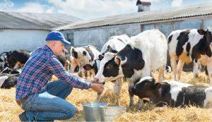 animal livestock nutrition feed