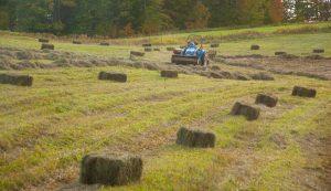 small square hay bales baling