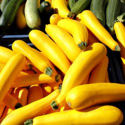 squash excess produce