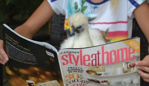 therapy chickens emotional support