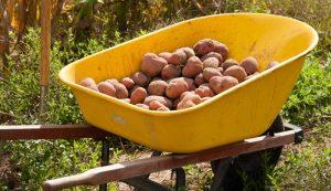 wheelbarrows hobby farm farms wheelbarrow